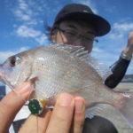 チャリコ(タイの稚魚)