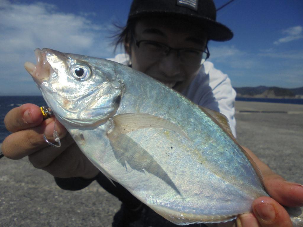 シマアジ(幼魚)