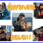 瀬戸内の船カワハギ釣り(福山沖)