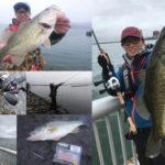 琵琶湖南湖でバス釣り!
