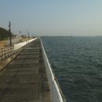【大阪】 魚釣り園護岸(南港魚釣り公園)