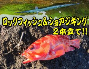 ロックフィッシュ&ショアジギング2本立て!!熊野の二木島湾磯で<