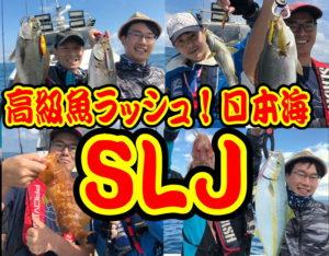 高級魚ラッシュ!日本海SLJ