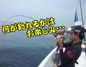 手軽に楽しめるSLJ(佐田岬沖)
