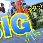 7月12日(日)まで 夏のBIGバーゲン