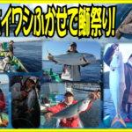 串本カセのイワシフカセ釣り