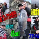 日振島 グレフカセ釣り