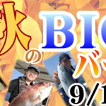 9月12日(日)まで 初秋のBIGバーゲン
